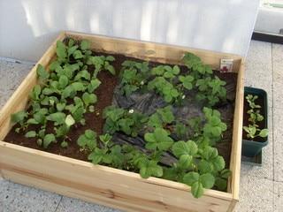 Faire un potager sur son balcon c 39 est possible - Faire un jardin sur son balcon ...