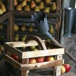Conserver les pommes et les poires après la récolte