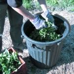 Fabriquer du purin d'ortie, toujours utile et totalement bio