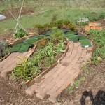 6 conseils pour réussir son jardin potager