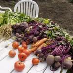 Avec quels légumes débuter son potager ?