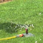 Arroser sa pelouse, quelle quantité d'eau privilégier ?